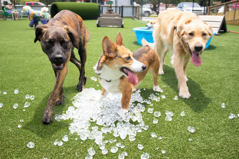 Dogs playing in ice in the play area