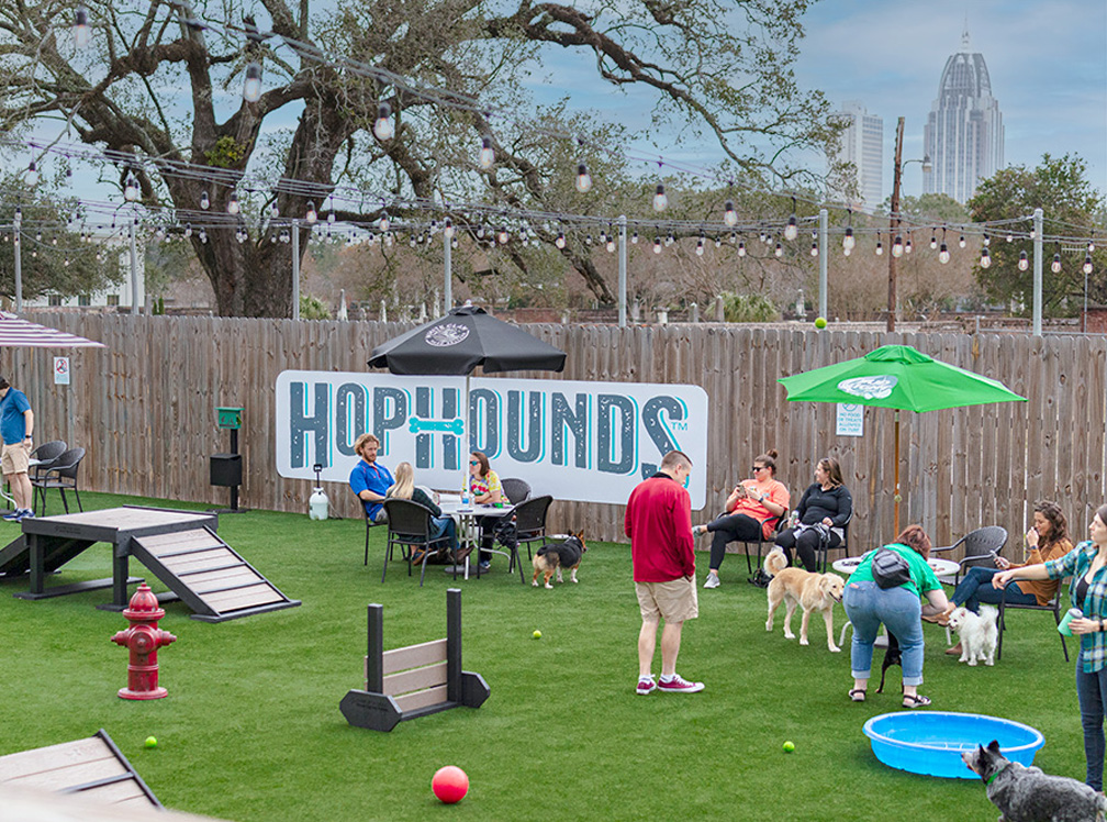 HopHounds playground with cityscape in background